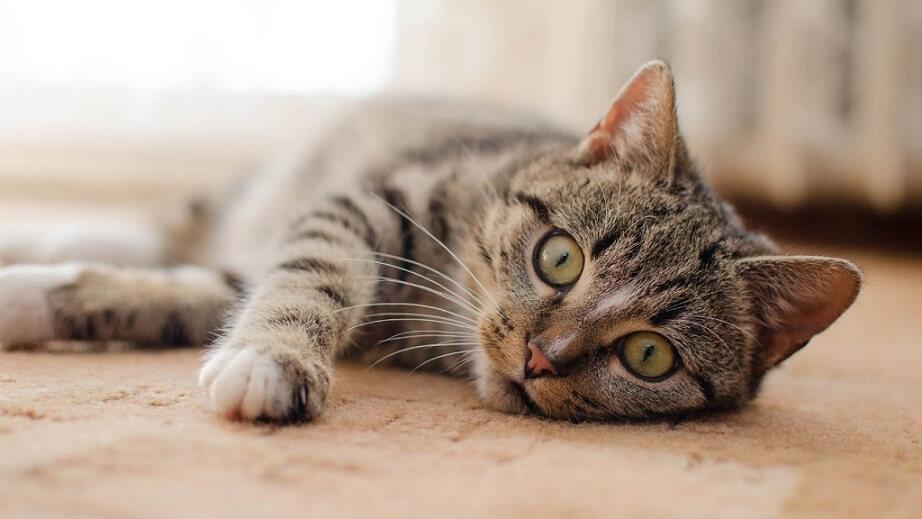 猫保護団体