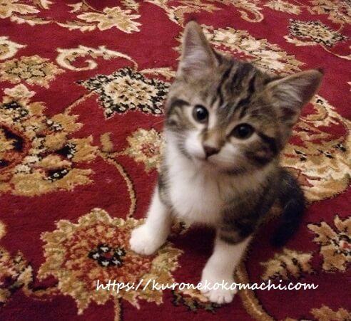 カナダで猫を飼う(1匹目)