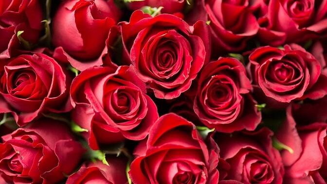 カナダのバレンタインの贈り物は花束