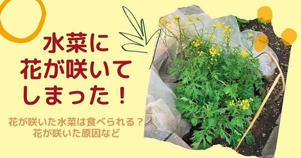 水菜に花 食べられる